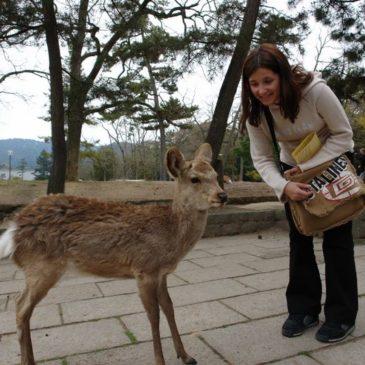 Japonia 2007 – Nara